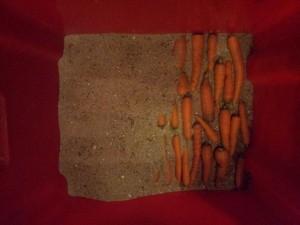 Conservation des carottes dans le sable