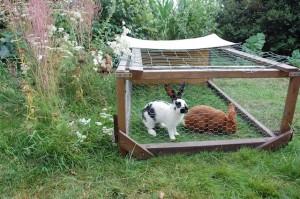 Nos lapins domestiques dans un clapier mobile