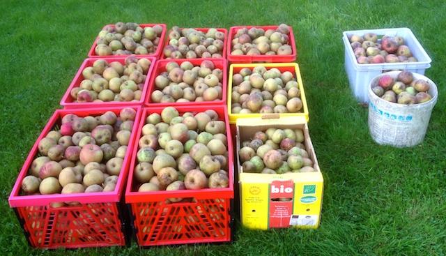 Récolte 2014: 9 bacs destinés au jus et 2 à la compote