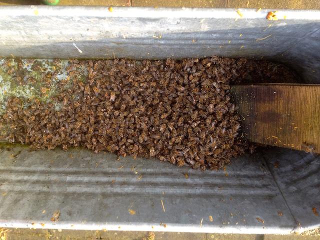 Bac sous l'entrée de la ruche