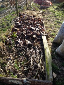 Feuilles de nos arbres récoltées à l'automne