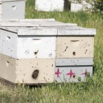 La ruche : Dadant ou Warré ?