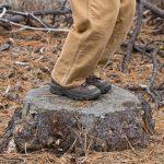 Détruire des souches par le feu : une bonne idée ?